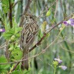 A Sparrow's Life