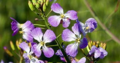 Weeds in Bloom
