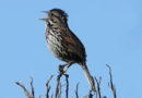 A Bird with a Song
