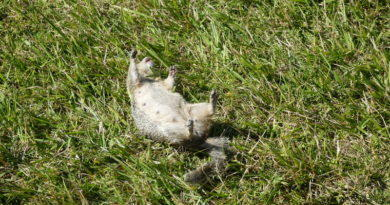 Another Dog Kill