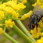 A Good Fly
