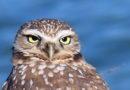 Rare Owl Visits Park