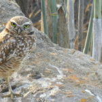 Owl Liking It