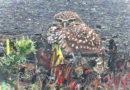 Owl in Fog