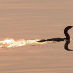 A Day of Cormorants