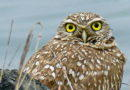 Owl at Winter Solstice