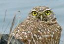 Owl at Winter Solstice