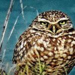Owl is Joy