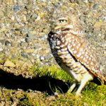 Owl Diary: Thursday 1/3