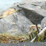 Owl Diary: Saturday 1/5