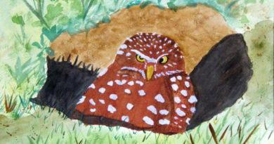 A Painter's Owl