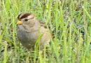 Early Bird in Dew