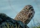 Owl Diary: Tuesday 1/1