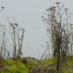 Owl Diary: Sunday 1/6