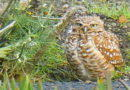 Owl Diary: Wednesday 1/9