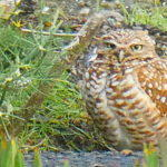 Owl Diary: Wednesday 1/9