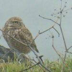 Owl Diary: Thursday 1/10