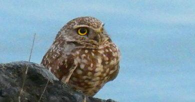 Owl Diary: Friday 1/11