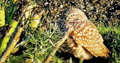 Owl Diary: Saturday 1/12