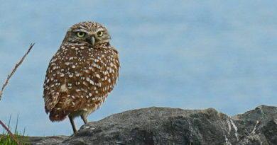 Owl Diary: Sunday 1/13