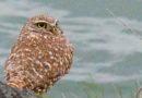 Owl Diary: Monday 1/14