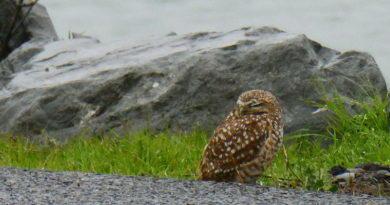 Owl Diary: Tuesday 1/15