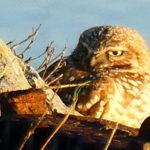 Owl Diary: Friday 1/25