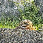 Owl Diary: Saturday 1/26