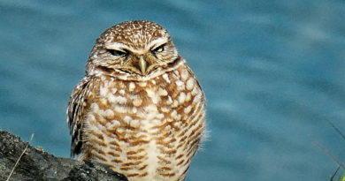Owl Diary: Tuesday 1/29