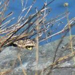 Owl Diary: Wednesday 1/30