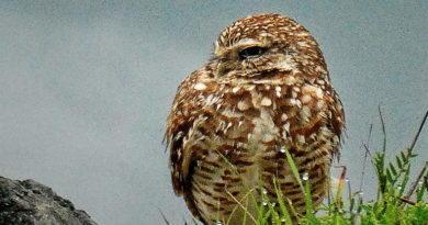 Owl Diary: Thursday 1/31