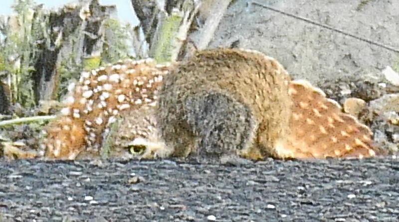 Owl Diary: Saturday 1/19