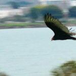Vulture Visits