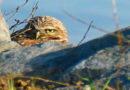 Owl Diary: Feb. 1-7
