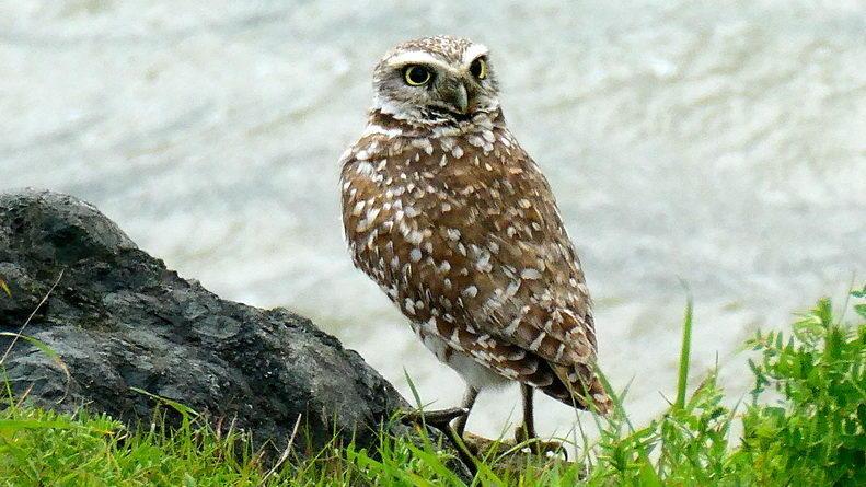 Owl Diary: Feb. 8-15