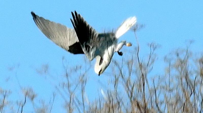 Kite Strikes