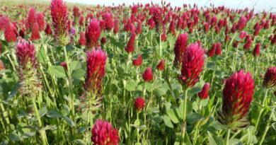 Flora Friday: Bloom, Bloom, Bloom