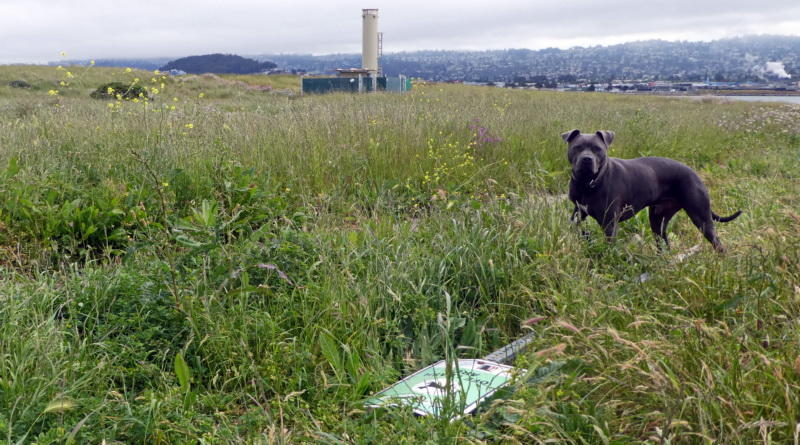 Another Dog Park Boundary Sign Falls