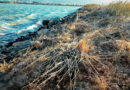 Vegetation Vandalism