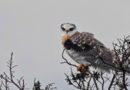 Kite Overhead