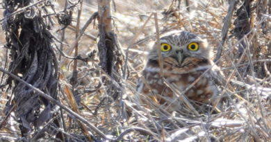Owl Day Three