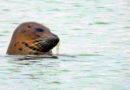 Seal Anthology