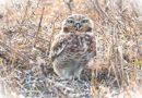 Owl in Second Day