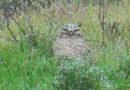 Owl in Rain