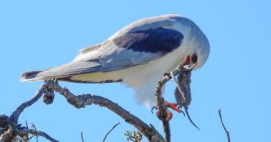 Bird's Gotta Eat