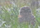 Owl Call: Thursday March 12