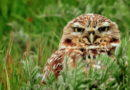 Owl Call: Saturday March 14