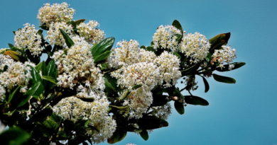 March Bloomers