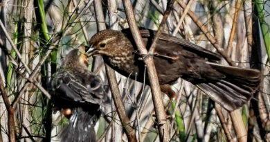 Bird Con