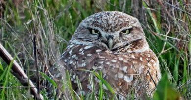Owl AM/PM ++